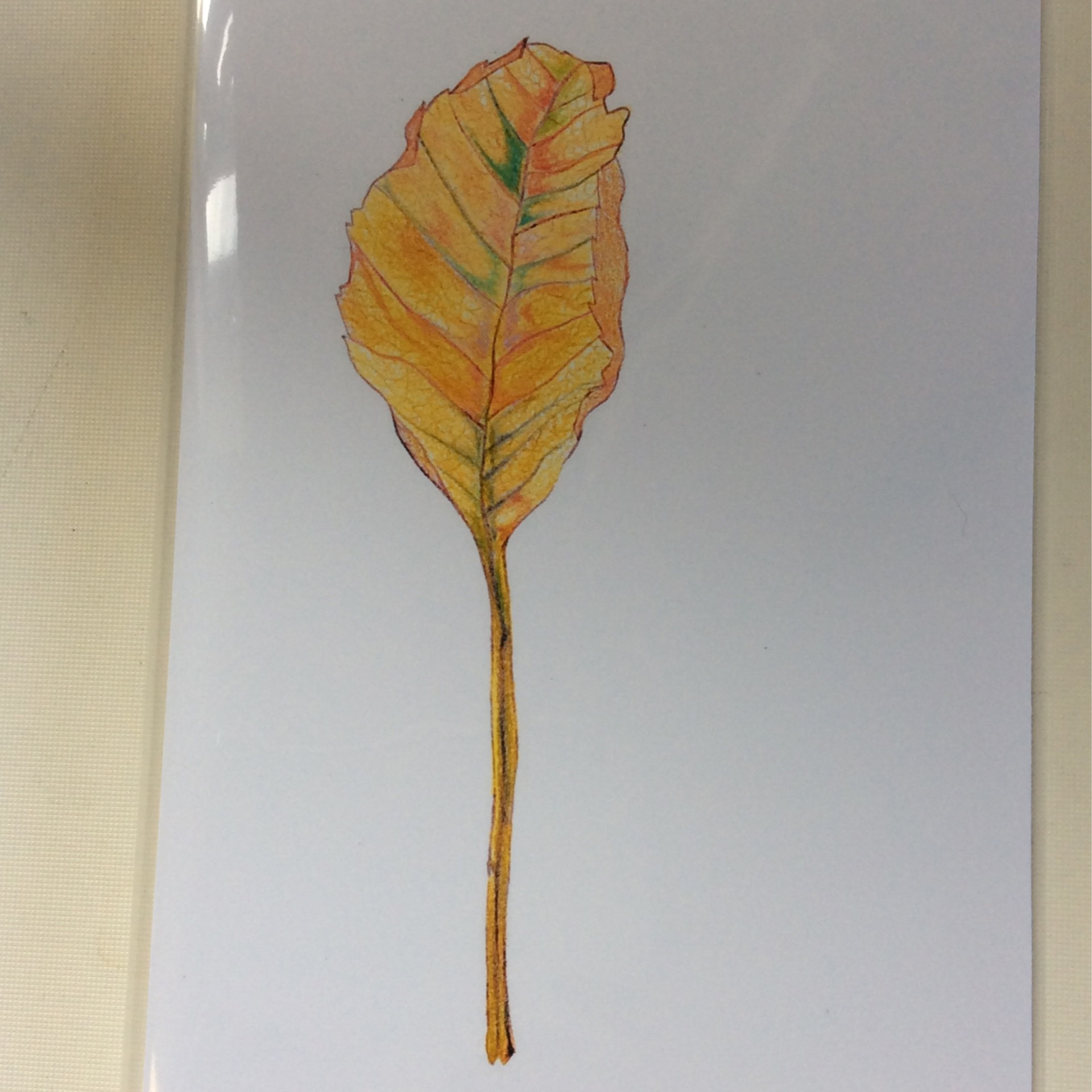 Still-life Leaf