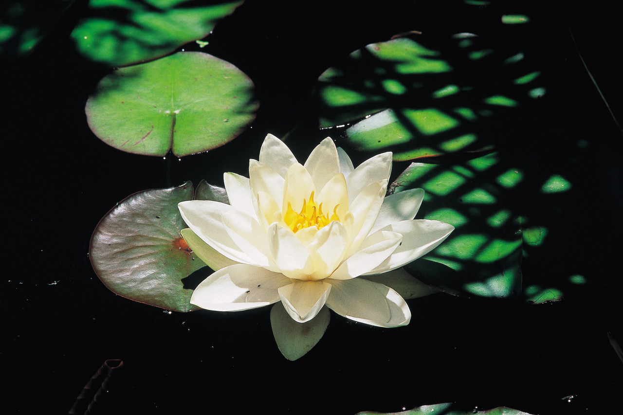 28 day spiritual cleanse for Deep pond plants