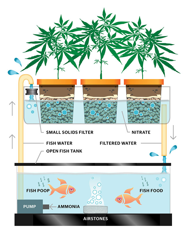 Aquachronic class for Self sustaining garden with fish