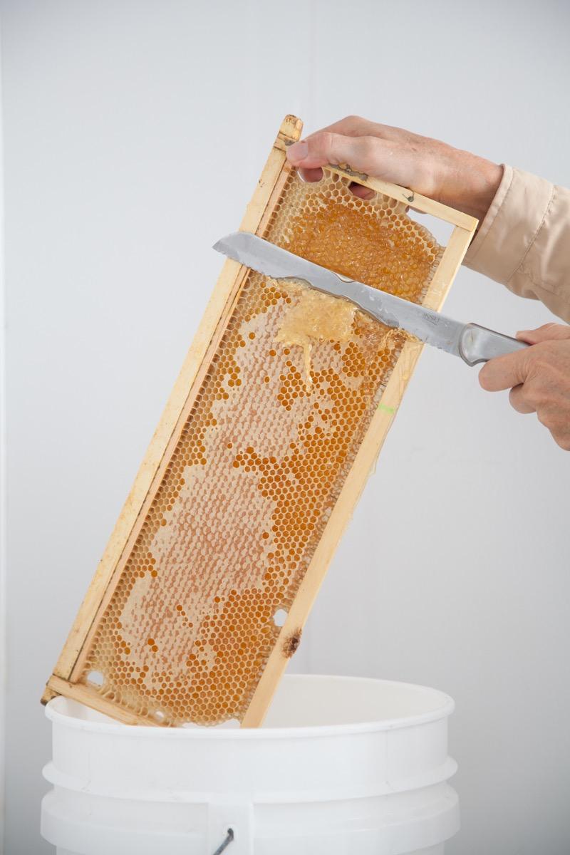 Class - Honey Extraction